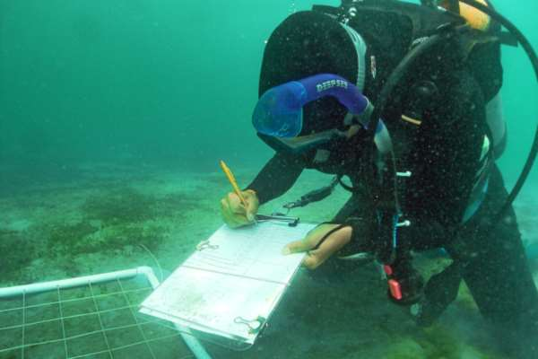 Seagrass bed monitoring